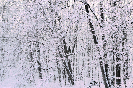 Snow covered trees after a snow storm. Imagens