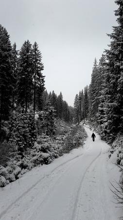 Man walking alone in the woods in snowy conditions, italian Alps, Alto AdigeSudtirol region.