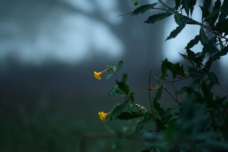 yellow flower Banco de Imagens