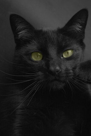 A black cat with green eyes looks into the camera lens. Stock Photo