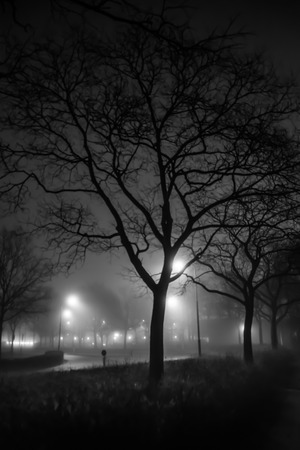Street on a foggy night lighted up by lantern posts with a tree in the foreground photo