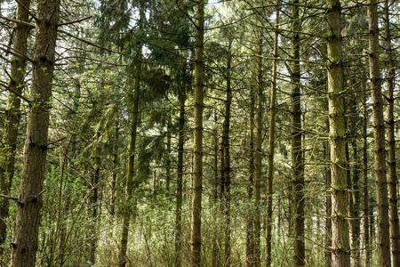 forrest: Forrest trees