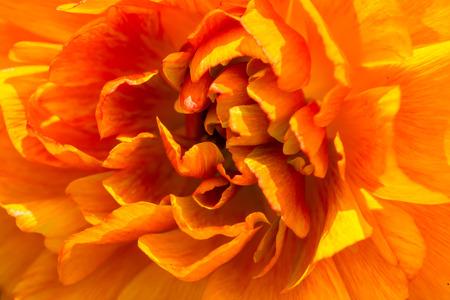 macro flowers: Orange flower closeup