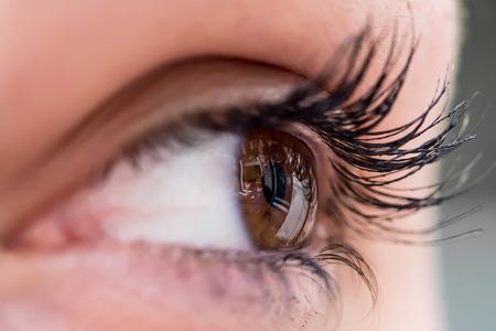 ojo humano: Primer del ojo humano