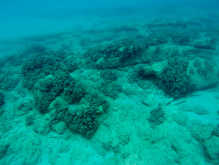 Under water coral