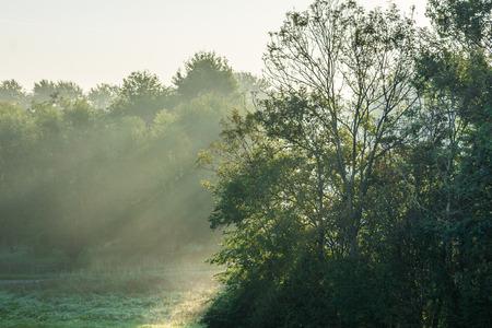 Sun rays falling through trees in Autumn Stock fotó