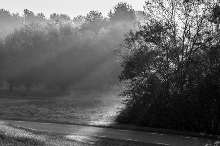 Sun rays falling through trees in Autumn in black and white