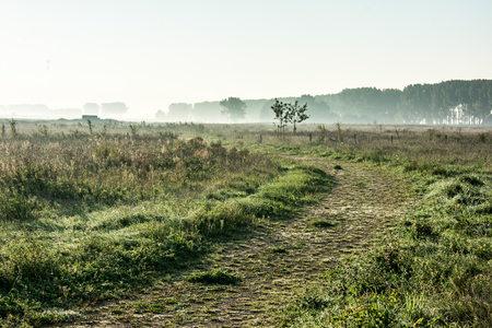 Rural landscape with path and fog
