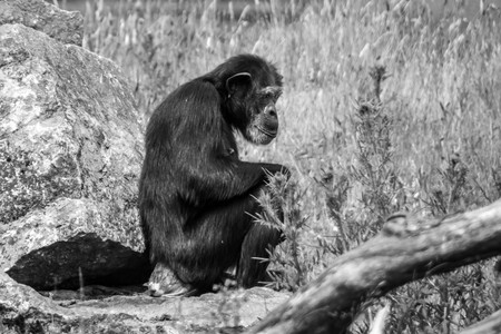 Monkey sitting on rock Stock fotó