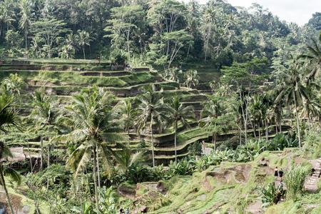 Tegalalang Rice Terrace - Bali - Indonesia Stock fotó
