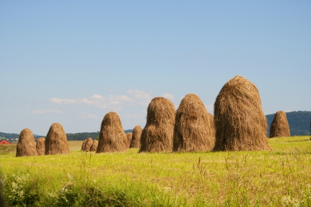 Haystacks on the sunny meadow photo