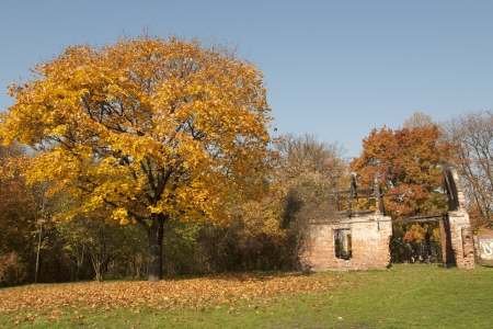 gingery: Tree with colourful leaves during the autumn