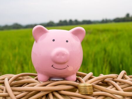 pink piggy bank with gold coins pile on the green rice field background, Saving money for future plan and retirement fund concept.