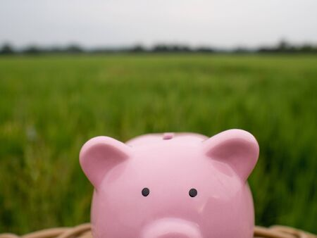 pink piggy bank on the green rice field background, Saving money for future plan and retirement fund concept.