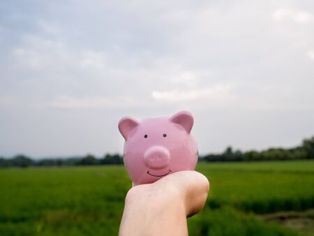 hand holding pink piggy bank on the green rice field background, Saving money for future plan and retirement fund concept.