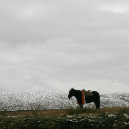 a horse in plateau,plateau scenery photo