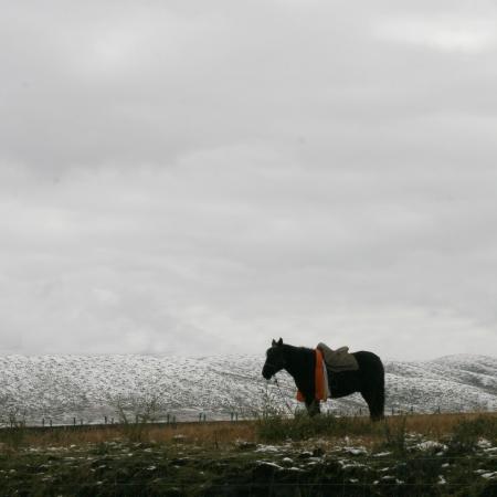 plateau: a horse in plateau,plateau scenery