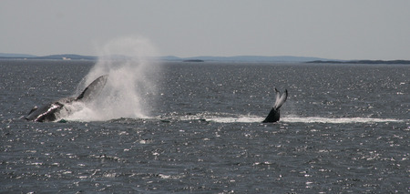 whale watching: whale watching in cruise port stephens,australia Stock Photo