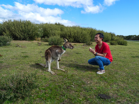 wilson: kangaroo in wilson promontory national park,australia