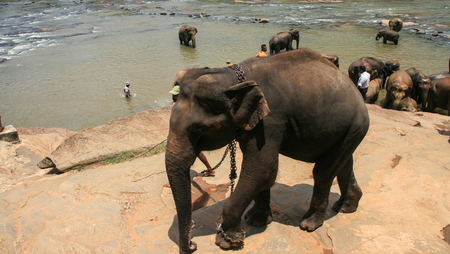 sri: elephants in sri lanka