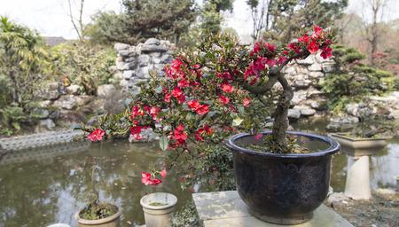 potted begonia lanscape in a park,chengdu,china