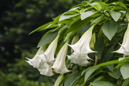 chengdu: flowers in living water garden,chengdu,china