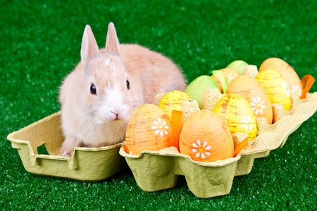 Cute bunny in a cartoon box with easter eggs photo