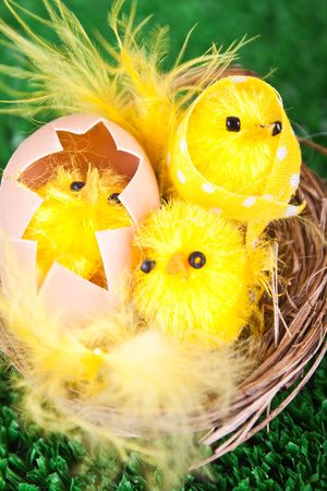 close-up of yellow easter chickens in nest photo