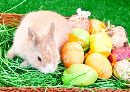 colorful easter eggs and little rabbit in nest photo
