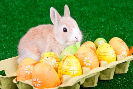 sweet rabbit and easter eggs in box photo
