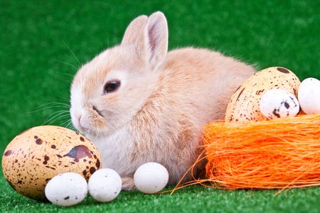 nestle: easter eggs, nestle and one relaxing rabbit Stock Photo