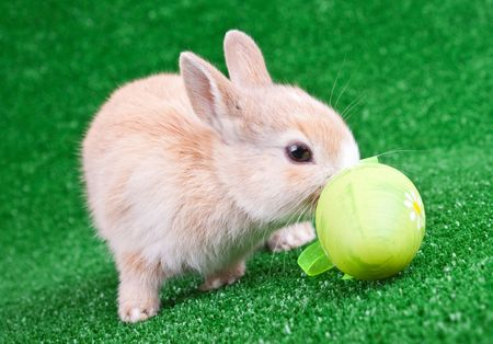 cute little rabbit sniffing an easter egg photo