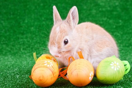 one little rabbit and colorful easter eggs photo