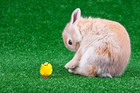 little chicken toy and one rabbit on grass photo