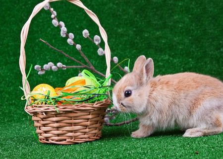 nest with easter eggs and a rabbit  photo