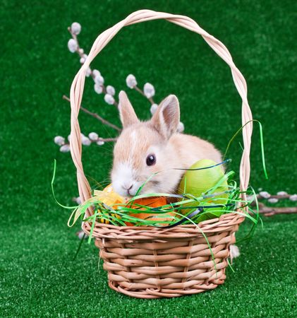 easter nest with eggs and bunny photo
