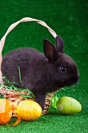 black rabbit in nest with colorful easter eggs Stock Photo - 6667429