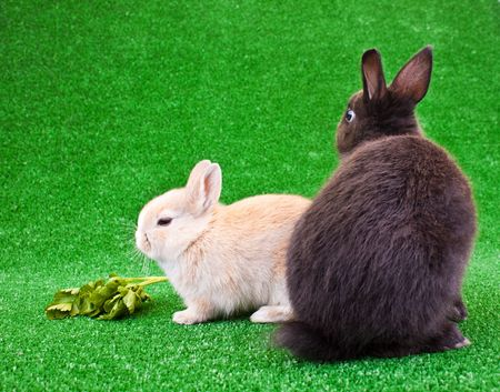 two cute bunnies on green grass relaxing photo