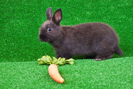 one little bunny and carrot on grass photo