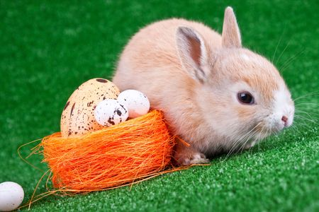cute rabbit beside orange nestle with eggs photo