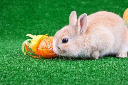 little rabbit and colorful easter eggs on grass photo