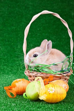 little cute bunny in basket in front of easter eggs photo