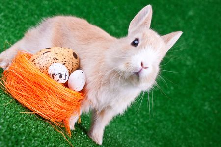nestle: one sweet bunny and nestle with eggs