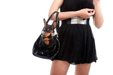pinscher: woman with dog in bag, trendy lifestyle, isolated on white background