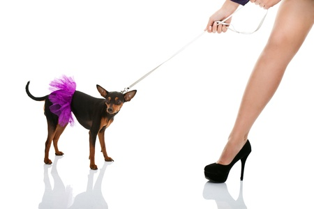 pulling beautiful:  womans leg and dog in pink dress on leash, isolated on white background Stock Photo