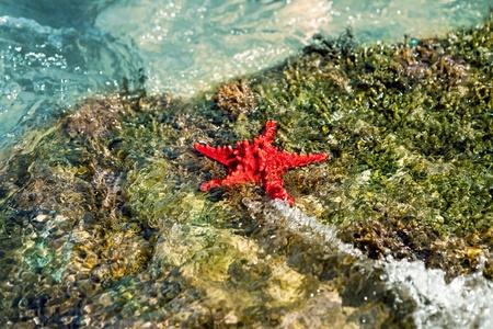 Bumpy Starfish in the water on rock Stock Photo - 10687354