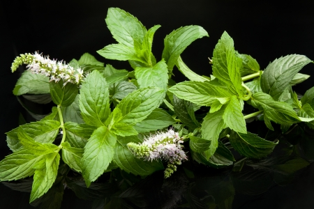 green mint leaves, on black background Stock Photo