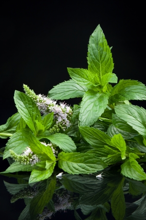 Fresh mint leaves with reflection on dark background photo