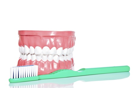 toothbrush and jaws, isolated on white background  photo