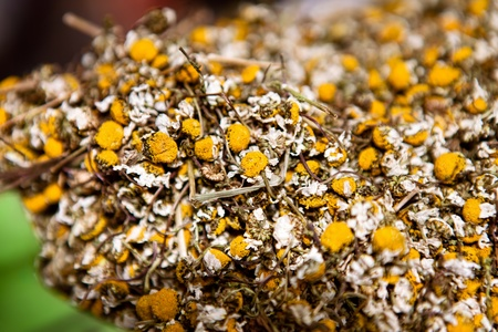 a lot of dried out chamomile flowers ready for tea making photo